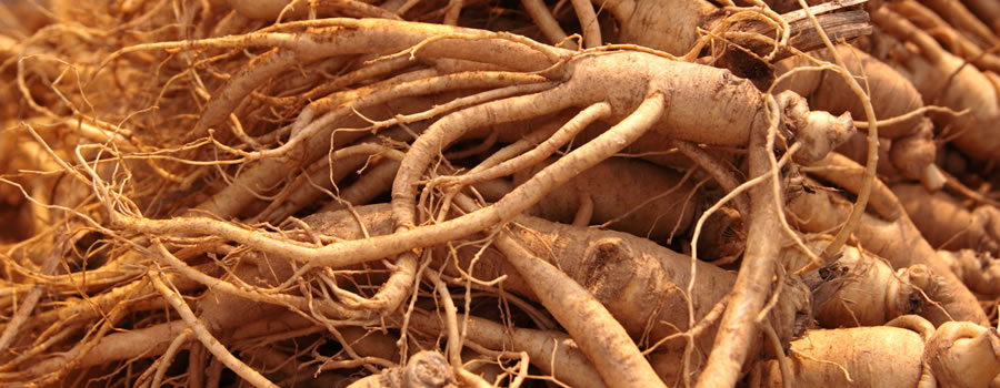 herbs ginseng for hair growth